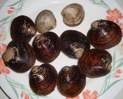 Maine Mahogany Clams