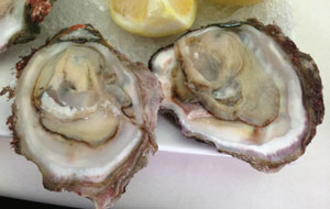Wild Mossel Bay Oyster Closeup