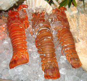 Omani Lobster